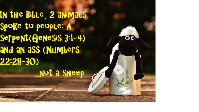not-a-sheep
